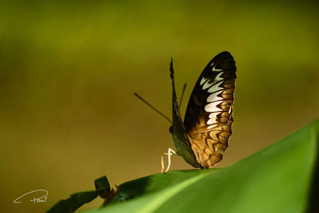 Butterfly waiting for start